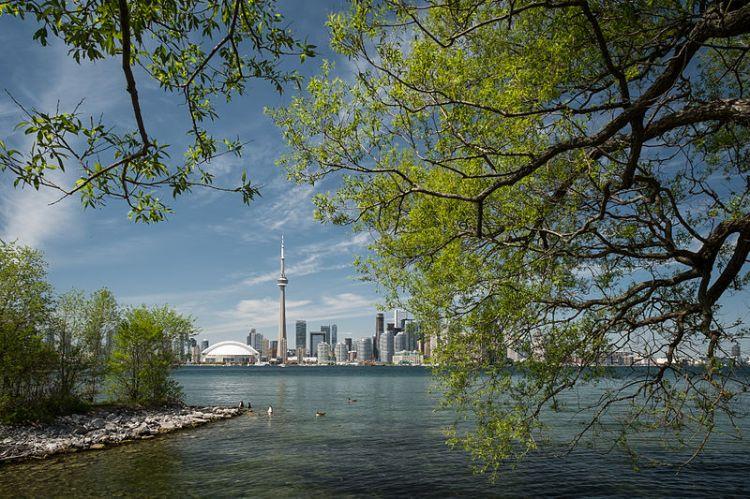 Trees Toronto